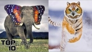 Video: Top 10 Animals Created By Science